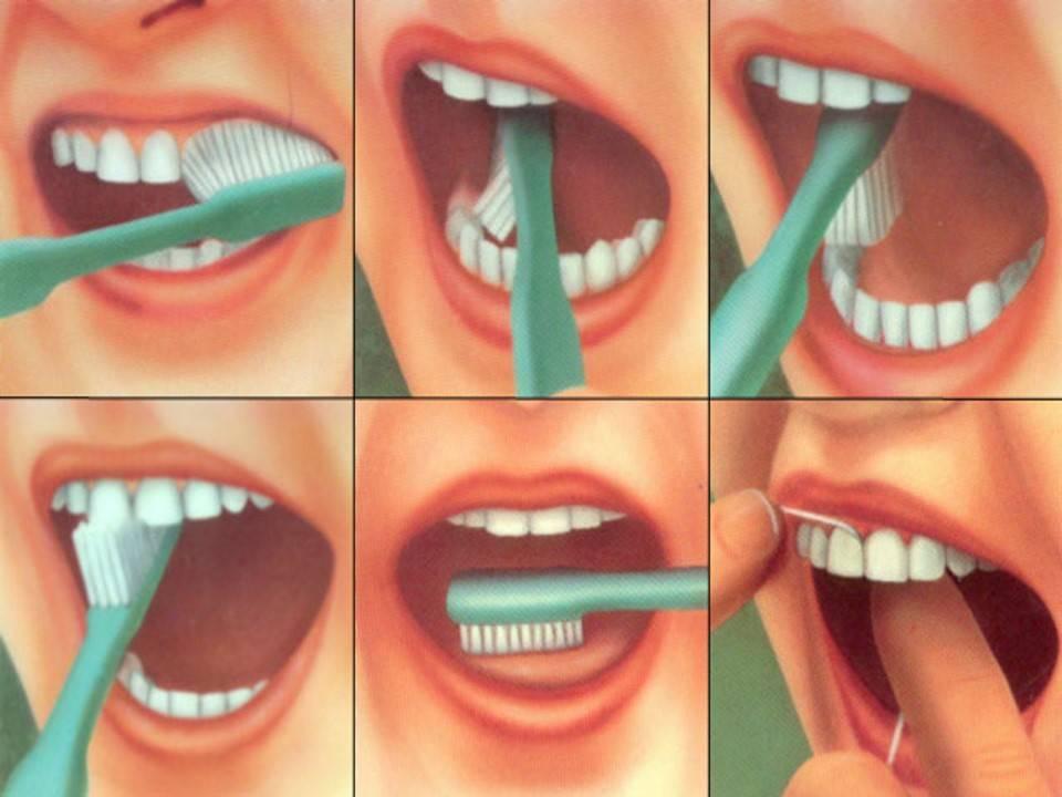Инструкция У Кого Зубов